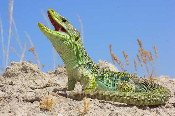 Anfibios y Reptiles