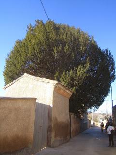 02 Daroca Torre Don Evaristo tejo (1)
