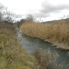 El río Jalón