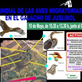 10 de mayo Día Mundial de las Aves Migratorias en el Galacho de Juslibol