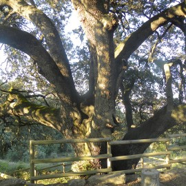 17 nuevos árboles singulares