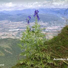 BOTÁNICA. Excursión a la Peña Oroel