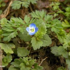 BOTÁNICA. El florido invierno