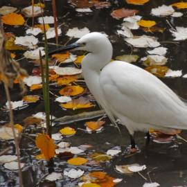 Exposición: Pájaros en la cabeza