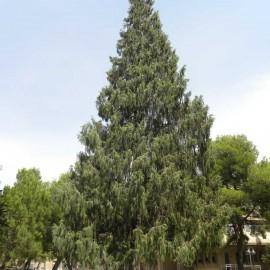 Árboles excepcionales: las catedrales de la naturaleza