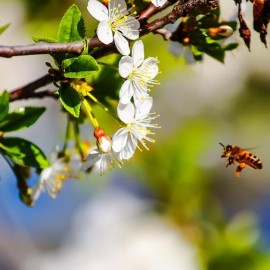 Polinización e insectos polinizadores