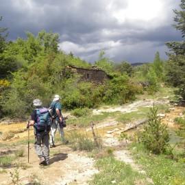 BOTÁNICA. Bentué de Nocito-Barranco d'Abellada (Huesca)