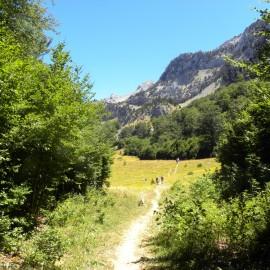 BOTÁNICA. REFUGIO DE LINZA – PICO PETRECHEMA (Pirineo aragonés)