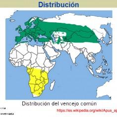 Distribución Apus apus - Wikipedia