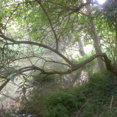 La vegetación de rivera