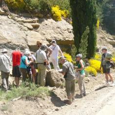 13 Viendo fósiles marinos en la Fm. Belsué-Atarés (3ª parada)