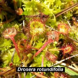 Botánica. Orihuela del Tremedal