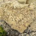 Dolomías del Muschelkalk (M1) moldes de galerías