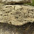 Dolomías oquerosas por bioturbación del Muschelkalk (M1)