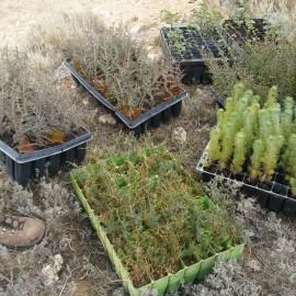Repoblación forestal en Grisel