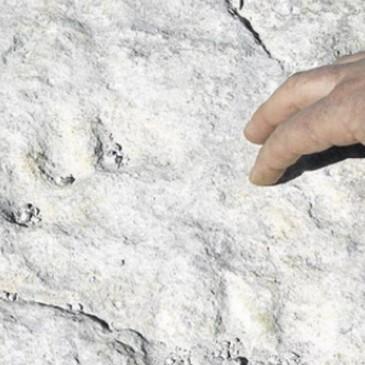Una posible huella fosilizada de tigre de dientes de sable. - JAIME GALINDO