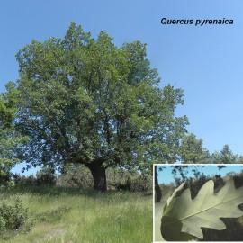 Botánica. Visita a Hacinas (Burgos)
