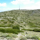 Paisaje de sabina rastrera (Juniperis sabina)