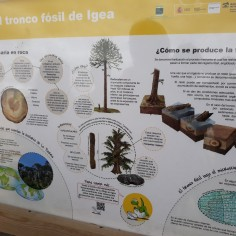 Tronco fósil de Igea