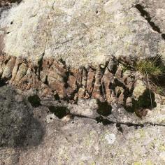 18.- Lamprófido en la granodiorita