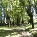 07 Caminando por los chopos cabeceros hacia nuestro objetivo