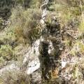 13 Margas y calizas de la Fm Cerro del Pez