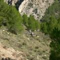 15 El grupo sudando la geología por la Fm Turmiel