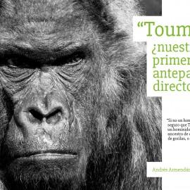 «Toumai» ¿nuestro primer antepasado directo?