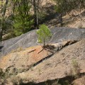 25 Geología-arcillas-oscuras-de-la-Fm-Escucha-bco-lateral-del-río-Ancho-Montalbán