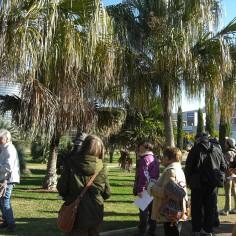 Contemplando las Livistona chinensis y  L. decipiens