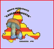 Gran Exposición de Setas Clasificadas en las XXIX Jornadas Micológicas del GM Caesaraugusta