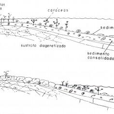 Esquema de lago Carbonatado según Pérez y al.