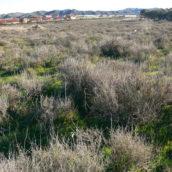 Parte del abanico aluvial N 2 producido en el medievo