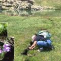 Fotografiando la carnivora (Pinguicula grandiflora grandiflora) en el ibón