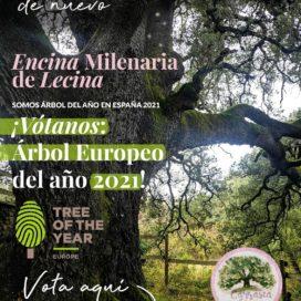 ¡VOTA: ÁRBOL EUROPEO DEL AÑO 2021!