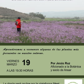LAS PLANTAS HUMILDES DE LOS CAMINOS